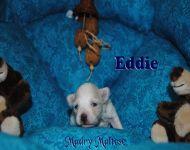 Eddie_26_12_2017_14days_1a