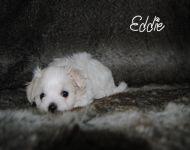 Eddie_28_01-2018_6weeks_12a