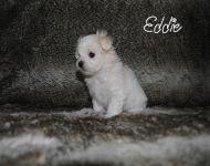 Eddie_28_01-2018_6weeks_17a