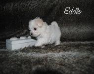 Eddie_28_01-2018_6weeks_34a