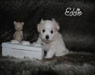 Eddie_28_01-2018_6weeks_9a