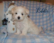 Eddie_8weeks_51a