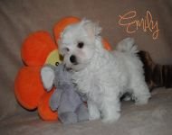 Emily_18_02_2018_9weeks_47a