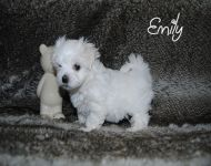 Emily_28_01_2018_6weeks_22a