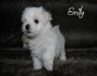 Emily_28_01_2018_6weeks_24a