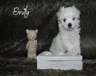 Emily_28_01_2018_6weeks_29a