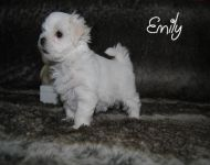 Emily_28_01_2018_6weeks_4a