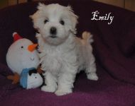 Emily_8_weeks_14a