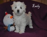 Emily_8_weeks_15a