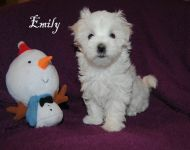Emily_8_weeks_17a