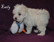 Emily_8_weeks_27a