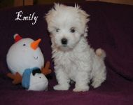 Emily_8_weeks_38a