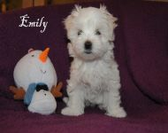 Emily_8_weeks_48a