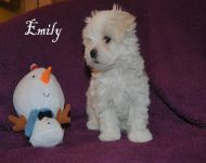 Emily_8_weeks_51a