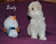 Emily_8_weeks_55a
